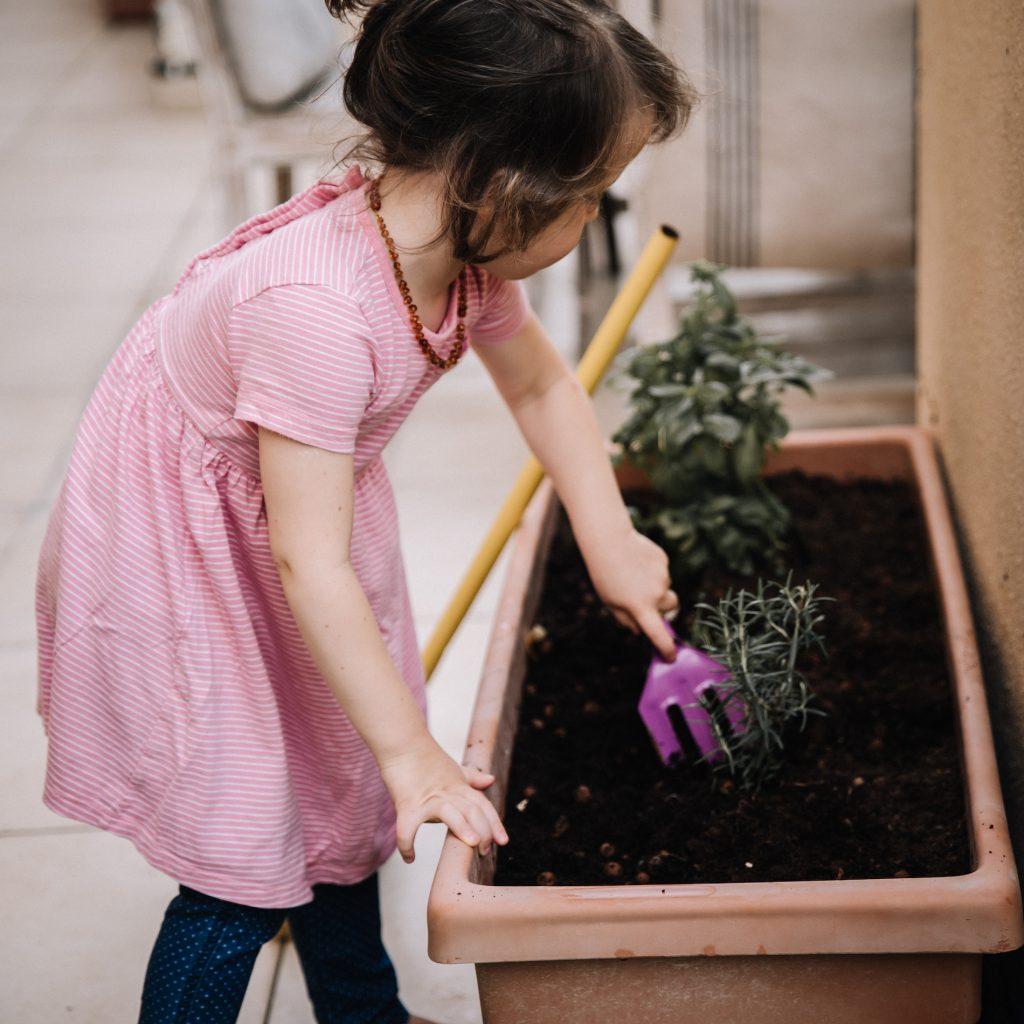 Preschooler using gardening fork to plants herbs in pot